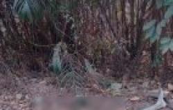Corpo de homem seminu é encontrado em área rural de Cuiabá