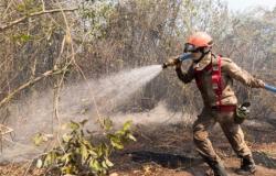 Laudos apontam que incêndios no Pantanal foram provocados por ação humana