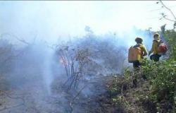 Chuva diminui focos de incêndio no Pantanal