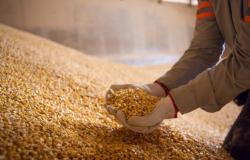 Milho inaugura a terça-feira estendendo ganhos na B3 e retomando os R$ 100,00