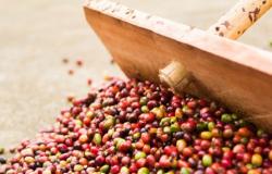 Café retoma negócios com valorização em NY e Londres: Analista mantém tendência de preços fortes