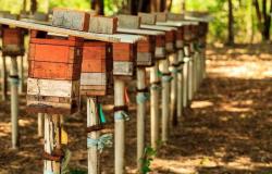 Governo entrega caixas de abelhas para comunidade quilombola em Livramento