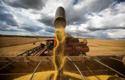 Soja cai forte nesta 2ª em Chicago com nova despencada do óleo e clima no Corn Belt