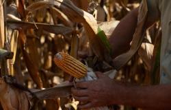 Codem aprova investimentos de R$ 387 milhões em linhas de crédito para produtores rurais e empresários de MT