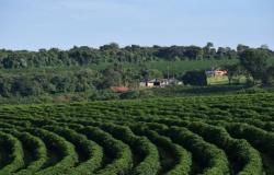 Previsão de safra: Estado de SP deve aumentar em 2,06% produção de culturas anuais