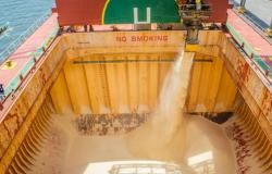 Brasil exporta mais de 530 mil t de açúcares e melaços na 2ª semana de agosto