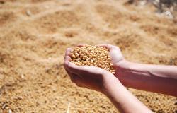 Aplicação de calcário nas lavouras aumenta a produção de grãos, diz pesquisa feita por alunos da UFMT