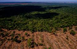 Sema e Ibama iniciam ação conjunta de combate ao desmatamento no norte de MT
