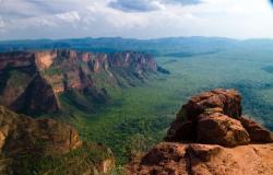Presente em municípios de 14 estados, cerrado está entre os biomas mais vulneráveis durante a seca