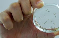 Casos de chikungunya em Mato Grosso aumentam 3,5 vezes este ano