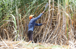 Produção de etanol cresce 19% na 1ª quinzena apesar de recuo na moagem, diz Unica