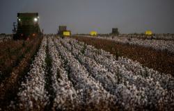 Exportação de algodão soma 249,3 mil t no acumulado de novembro, aponta Secex