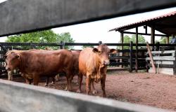 Guias de Trânsito Animal de Mato Grosso agora possuem QR Code e aplicativo para celular
