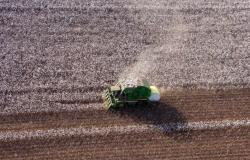 Mato Grosso tem o menor plantio de algodão dos últimos dois anos; alto custo influenciou