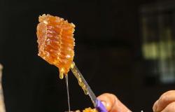 Exportações de mel cresceram 31,65% no 1º quadrimestre