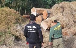 Operação Maravalha flagra madeireiras operando irregularmente e apreende 600 metros cúbicos de madeira