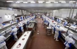 Funcionária de frigorífico tem afundamento de crânio após ficar presa em mesa de abate de bovinos em MT