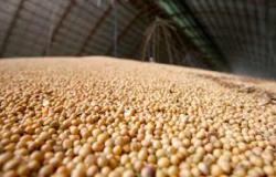Safra de grãos deve fechar 2020 com alta de 2,3%, segundo IBGE