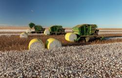 Reguladores de crescimento melhoram o manejo e aumentam produtividade na cultura do algodão