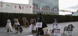 The Body Shop realiza ato contra testes em animais na Avenida Paulista