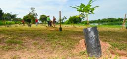 Plantio de mudas e ações de limpeza marcam celebração do Dia da Árvore
