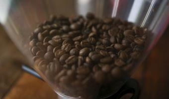 Conab prevê que país colherá 50,92 milhões de sacas de café neste ano