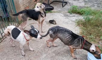 Doze cães abandonados dentro de casa trancada são resgatados pela Policia Civil