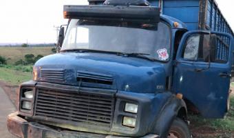 Polícia Militar prende suspeito e recupera 48 cabeças de gado furtadas em fazenda no interior