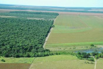 Artigo endossado por 407 cientistas brasileiros calcula o valor de serviços atrelados à conservação da natureza, como polinização, controle de pragas e segurança hídrica Foto: O independente.com)