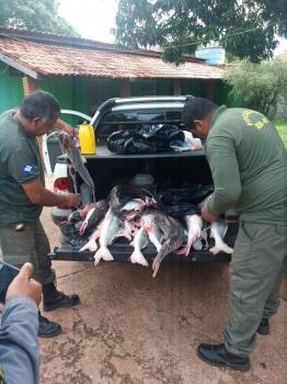 Duas operações realizadas em Santo Antônio resultaram na apreensão de 112 quilos de pescado ilegal - Foto por: Sema-MT