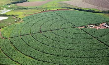 A previsão para a safra de soja deve atingir mais um marco inédito, com 131,8 milhões de toneladas.          Foto:Raylton Alves/Agência Ana