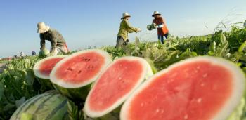 Frutas e hortaliças ficam mais baratas em agosto