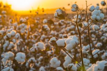 Soja e algodão foram responsáveis pelo aumento da área plantada, por serem culturas que têm apresentado maior rentabilidade e liquidez