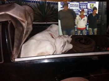 Três  são presos  por roubo  de  gado em comunidade rural  de Rosário Oeste
