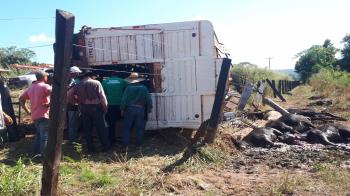 Carreta carregada de gado tomba e deixa moradores da zona rural por mais 15h sem energia