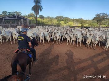 Segurança Pública atua de forma conjunta para coibir furto de gado
