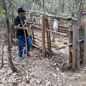 Em investigação sobre furto de gado, policiais civis encontram armadilha para captura de animais