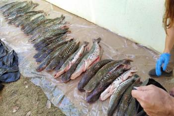 Policia Civil e Sema apreendem 100 kg de pescado transportado irregularmente