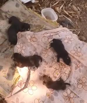 Policiais civis constatam maus-tratos contra seis cães e resgatam animais