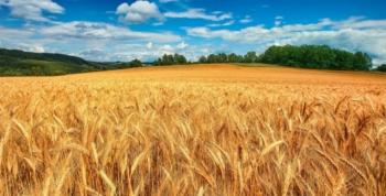 Austrália reduz projeção de produção de trigo em 2019/20 em quase 20% em meio a seca