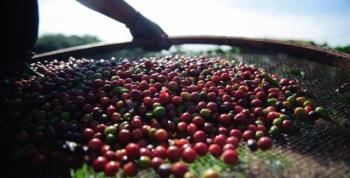 Escassez de café de qualidade atinge fundos e faz preços subirem