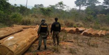 Brasil exportou milhares de carregamentos não autorizados de madeira de porto na Amazônia