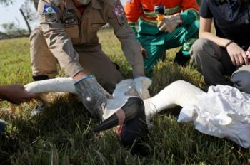 Voluntários podem se cadastrar para atender animais vítimas dos incêndios no Pantanal