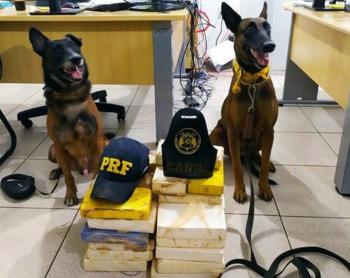 PRF apreende pasta base de cocaína e crack no Pará avaliadas em R$ 1,5 milhão que saíram do Médio Norte