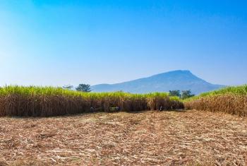 Com menos cana, unidades sucroenergéticas compram biomassa para continuar cogerando energia