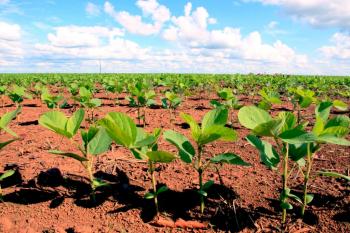 Mais de 6 mil propriedades serão fiscalizadas durante vazio sanitário da soja