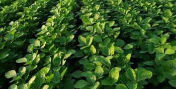Termina 10 de janeiro prazo para cadastro das áreas de cultivo de soja