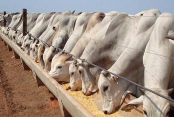 Alta nos custos de produção deve impactar o volume de animais confinados em 2021, aponta StoneX