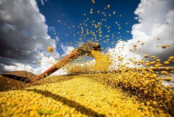 Rabobank eleva safra de soja do Brasil e reduz estimativa para milho