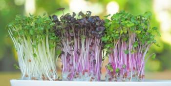 Fáceis de plantar em casa: conheça os microverdes